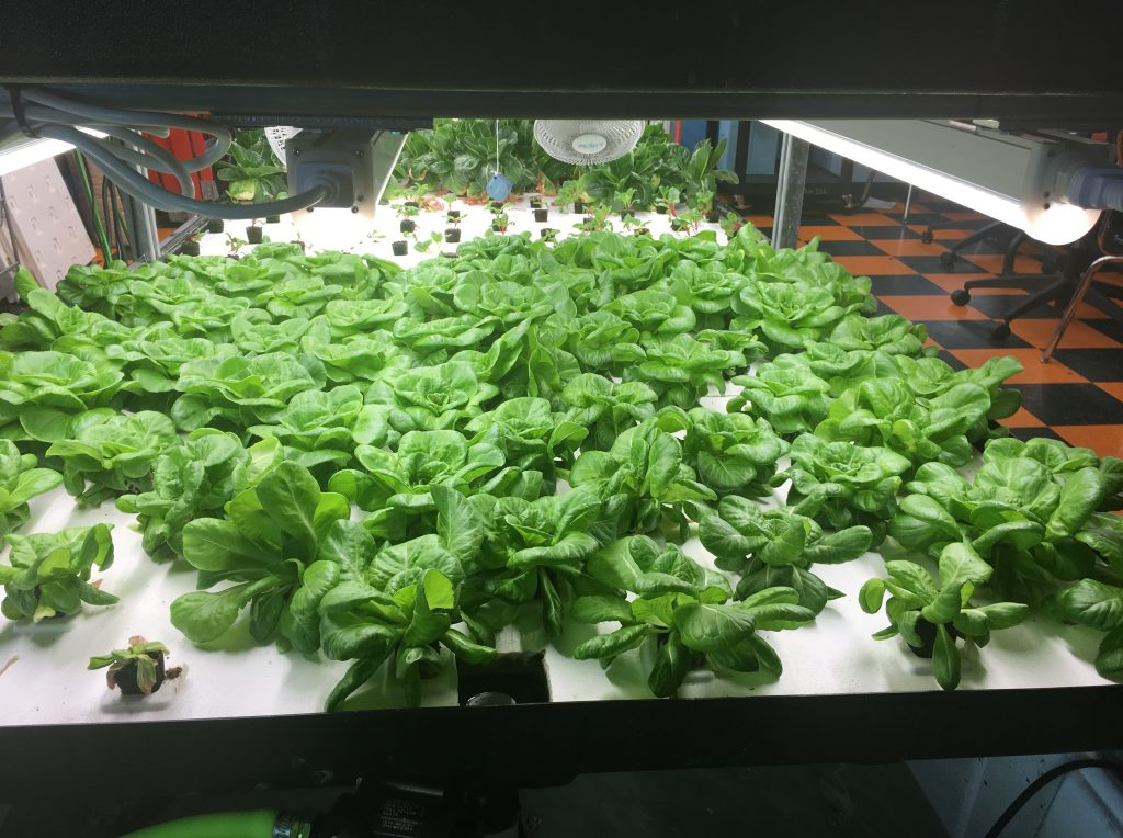 How Hydroponic School Gardens Can Cultivate Food Justice, Year-Round | MindShift
